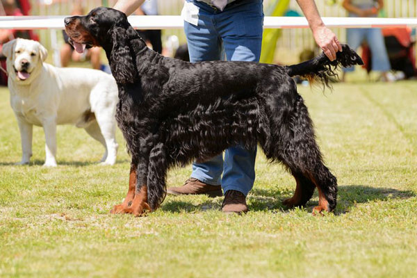 Much Hadham Fete Dogshow Main
